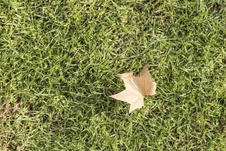 Autumn concept. Autumn fall leaf on grass.