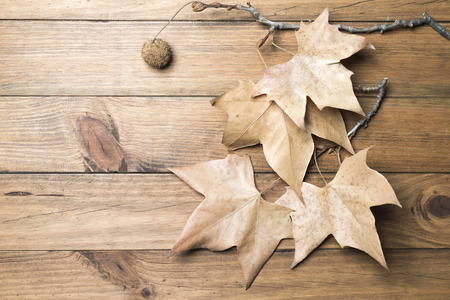 Autumn concept. Branch with autumn leaves on background of wooden boards
