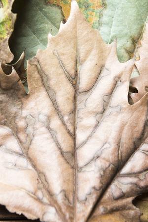 Autumn concept. Detail of an autumn leaf.