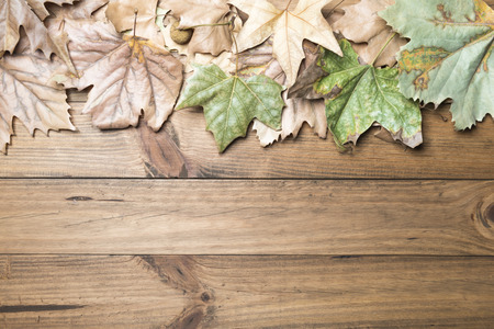 Autumn concept. Autumn leaves on wooden boards.
