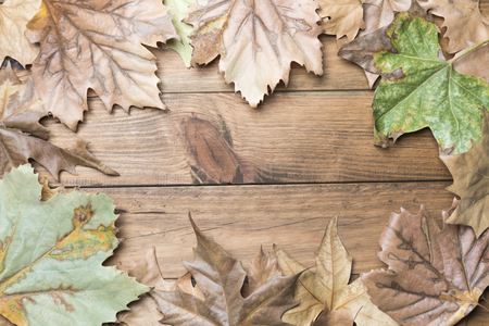 Autumn concept. Frame formed by autumn leaves on wooden boards 版權商用圖片