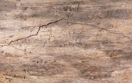 Texture, old wood. Tree of old crack and wormholes.