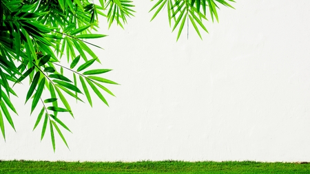 white cement wall and a bamboo leaves - background Stock Photo - 123554156