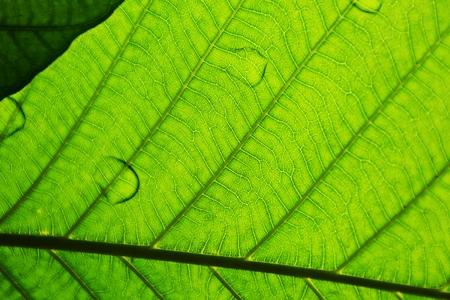 perfect green leaf patterns - closeup 免版税图像