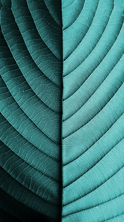 perfect blue leaf patterns - closeup