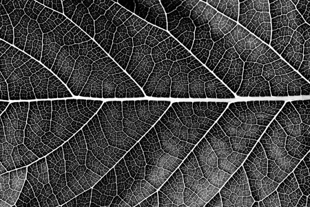 close up black leaf texture