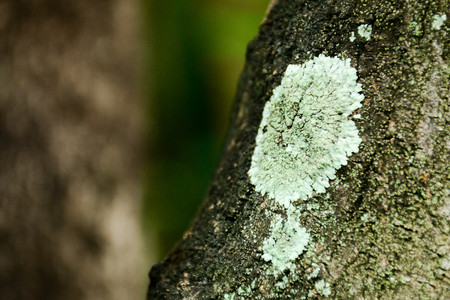 grey lichens on the branch Stock Photo
