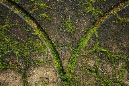 Green moss at old wall