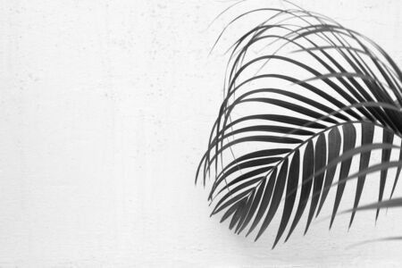 palm leaves and a concrete wall - monochrome Stockfoto