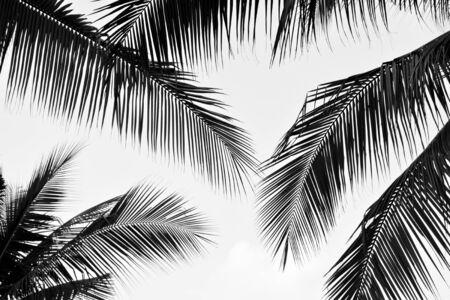 black palm leaves monochrome, design element