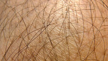 hairy leg of a man - closeup