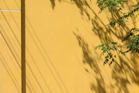 shadow of a leaf and branch on the yellow concrete wall
