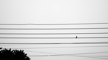 alone sparrow on electric cable - monochrome