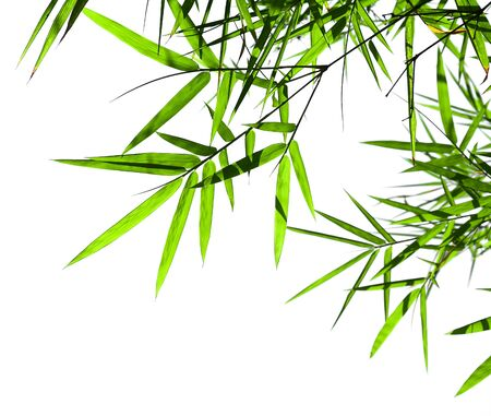 twig and bamboo leaf isolated on white background
