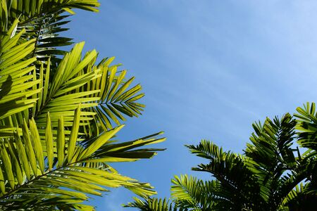 green palm leaves and blue sky in the forest 版權商用圖片