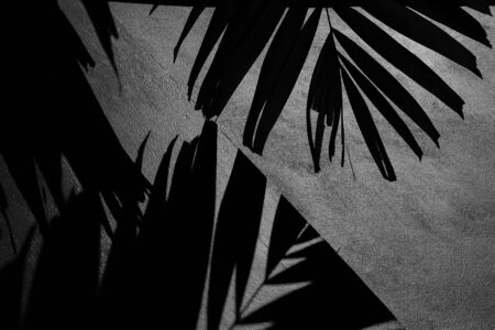 silhouette of palm leaves and shadow on a concrete wall - monochrome 版權商用圖片