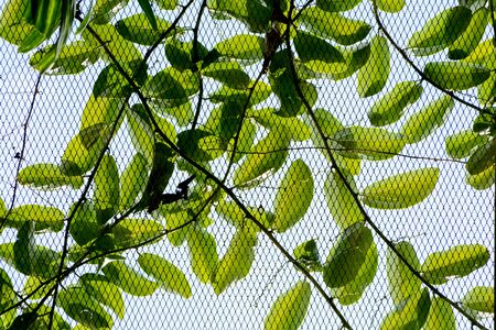 wire mesh with ivy Banco de Imagens