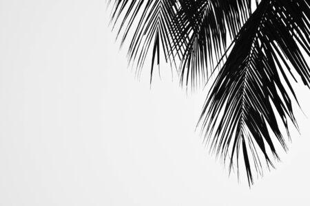 closeup palm leaves  - monochrome Фото со стока