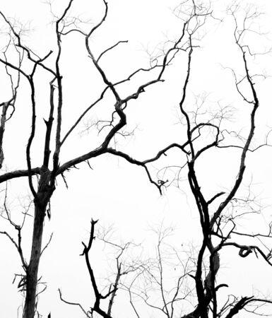 Bare tree branches on a pale white background Фото со стока