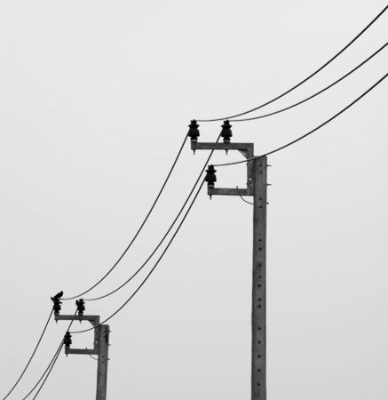 Electricity post with bird on white background