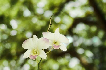 white orchid Фото со стока