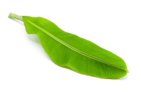 green banana leaf isolated on white background Фото со стока