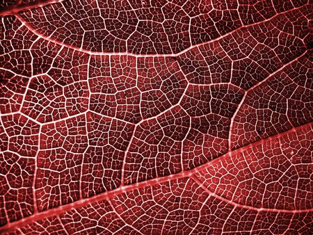 red leaf patterns Stock Photo