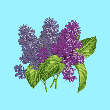 burgundy colour: May Bouquet of lilac of the three branches, isolated Illustration