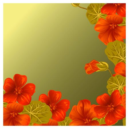 nasturtium: Background with nasturtium for design cards and invitations. Garden orange flower.