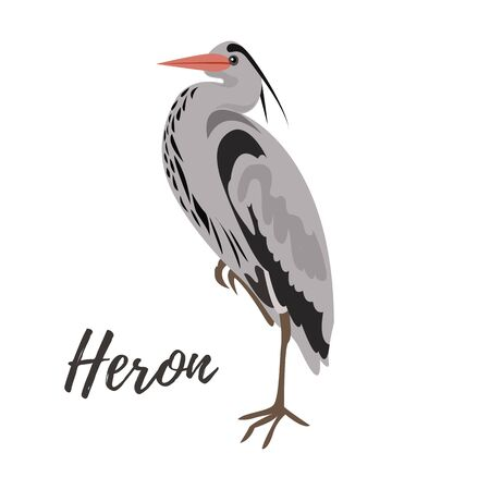 egret: Isolated gray heron bird on a white background, vector illustration, hand drawn