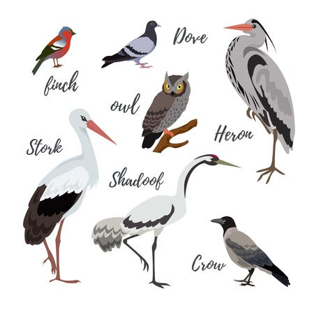 finch: Set of vector bird icons. Colorful realistic birds. Owl and pigeon, shadoof and crow, finch and stork Illustration