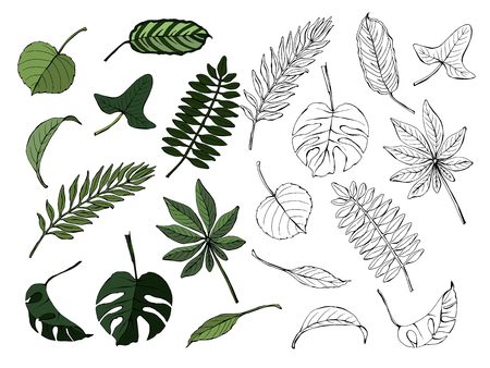 Set of different leaves, colored and monochrome, isolated on white background, vector hand-drawn illustration