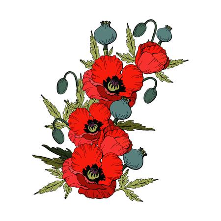 Bouquet de fleurs de pavot. Coquelicots rouges isolés sur fond blanc, illustration vectorielle