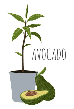Avocado - half, whole and avocado tree with leaves in pot. Cartoon hand draw illustration isolated on white background.