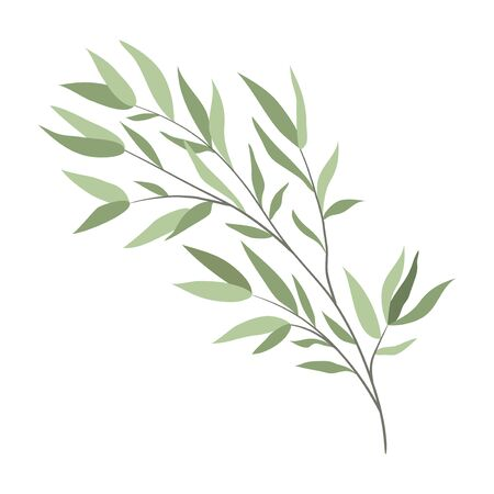 Isolated branch of a willow on a white background. Vector flat object