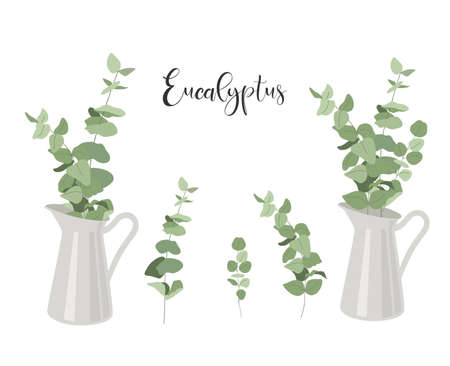 Set of isolated eucalyptus. Branches with leaves in jug. Vector