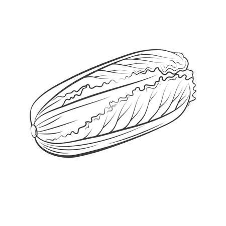 Peking cabbage Isolated on white background