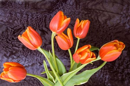 compliment: bouquet of the fresh tulips