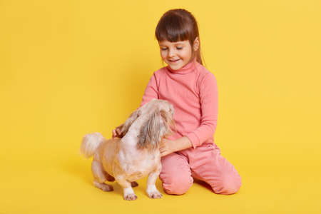 Little girl playing with Pekingese dog isolated over yellow background, kid dresses pink clothing looking at her pet and smiles, child playing with her favorite puppy.