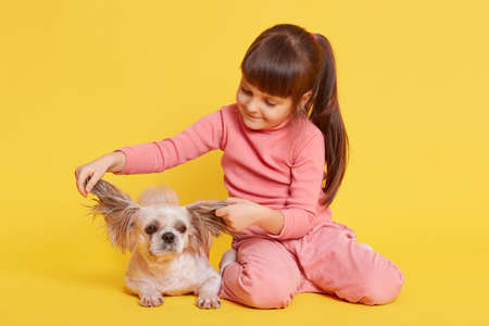 Happy child with dog against yellow wall, kid pulling Pekingese ears to sides, small girl looks at her pet, little girl with dark hair and ponytail playing with puppy.