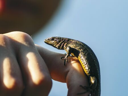 lizard sits on palm and basks in the sun