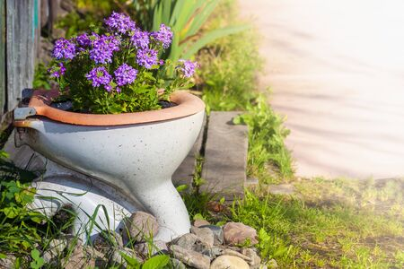 purple flowers growing in an old toilet