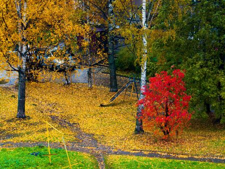 beautiful autumn city landscape with colorful trees and leaf-strewn ground