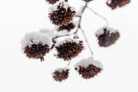 a sprig of plants under the snow against the white sky Фото со стока - 138097363
