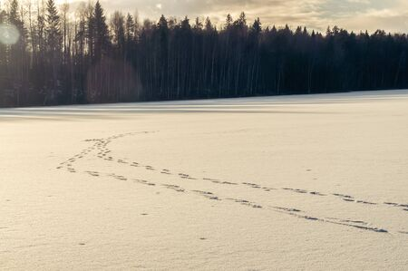 winter landscape with footprints trailing through a frozen lake to the forest