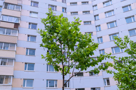 green tree against the backdrop of a huge gray high-rise. contrast between nature and the city