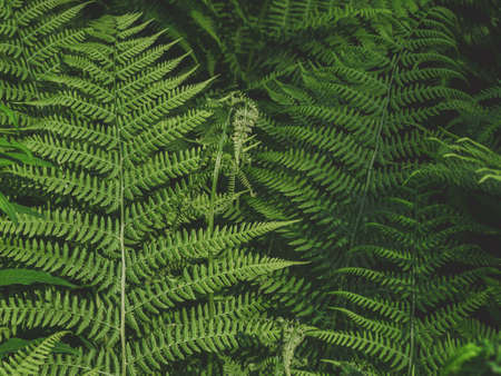 abstract background of fern leaves in dark key Фото со стока