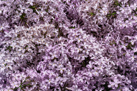 beautiful abstract background of many lilac colors