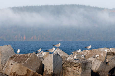 seagulls sit on stones against the background of the foggy landscape