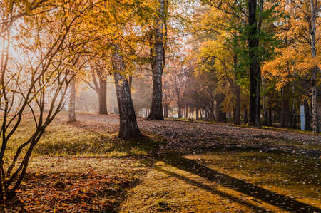 beautiful autumn landscape in the park illuminated by sunset light. High quality photo